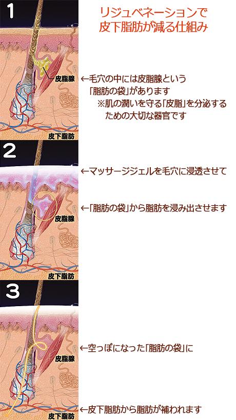 写真2(皮下脂肪が減る仕組み).jpg