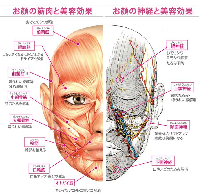 顔の筋肉と神経の美容効果.jpg